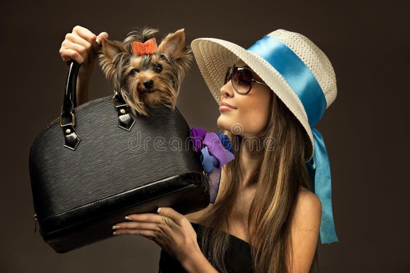 Junge glamor Frau mit Yorkshire-Terrier stockbilder