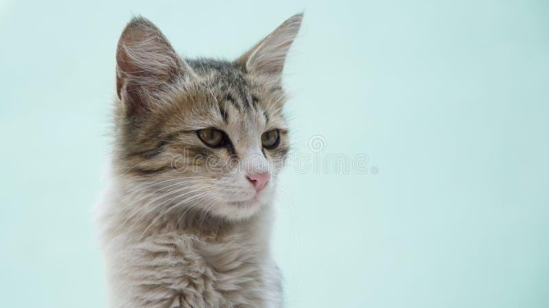 Junge graue Katze, die rightside sitzt und schaut lizenzfreie stockbilder