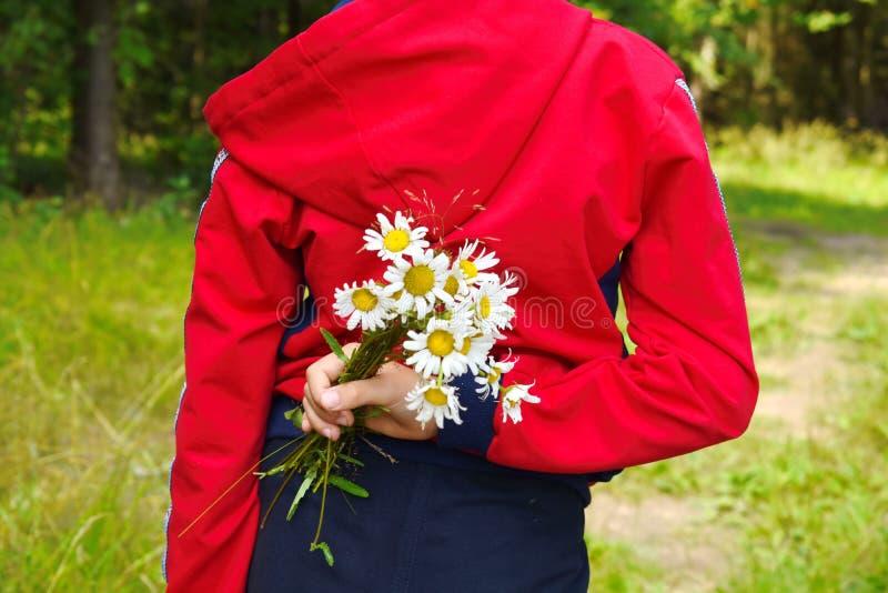 Junge hält in der Hand einen Blumenstrauß von Feld camomiles hinter der Rückseite lizenzfreie stockfotos