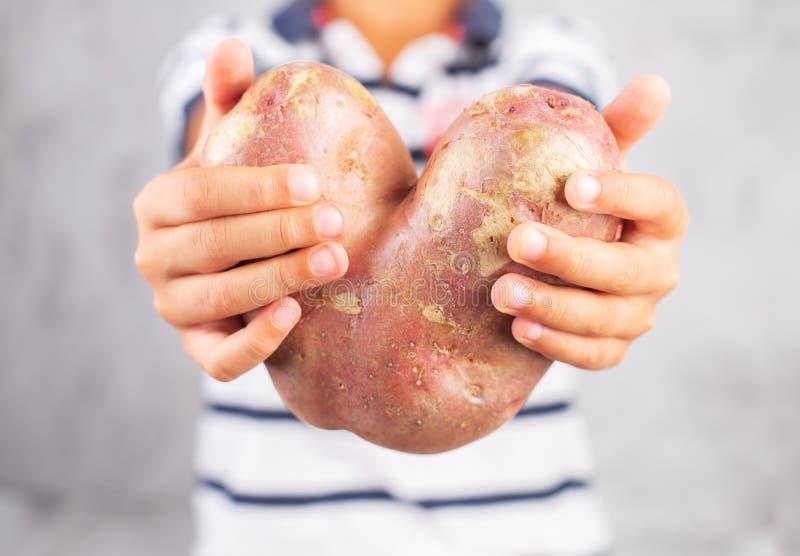Junge hält hässliche Kartoffel in der Herzform auf einem grauen Hintergrund Lustiges, unnormal Gemüse oder Lebensmittelabfällekon lizenzfreie stockfotografie