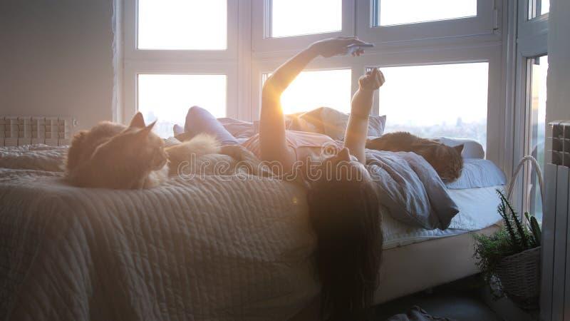 Junge hübsche glückliche Frau, die am Fenster im Bett mit Handy- und Maine-Waschbärkatzen während des Sonnenuntergangs mit Linse  stockbilder