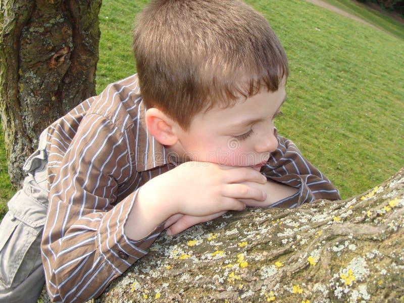 Junge herauf einen Baum lizenzfreie stockfotos