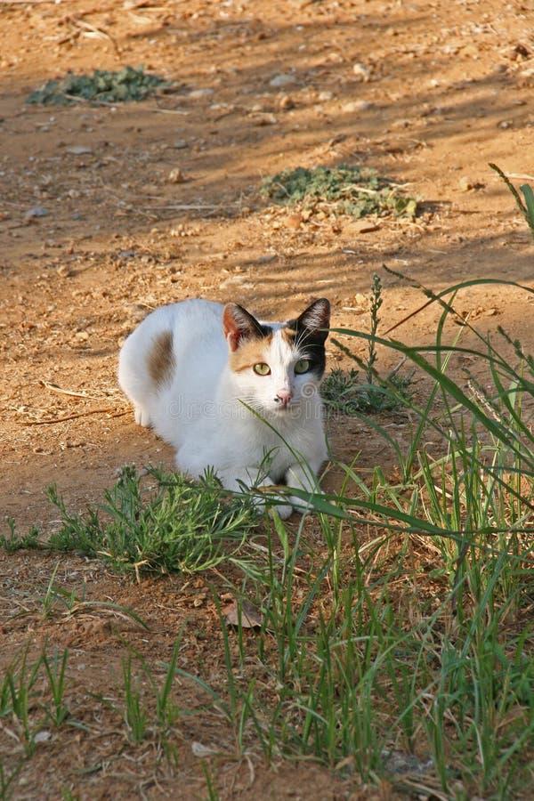 Junge Katze auf Kreta stockfotografie