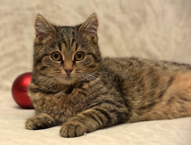 Junge Katze der getigerten Katze lizenzfreies stockbild