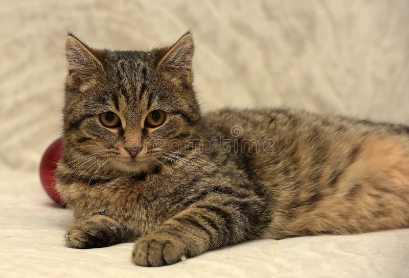 Junge Katze der getigerten Katze stockfotos