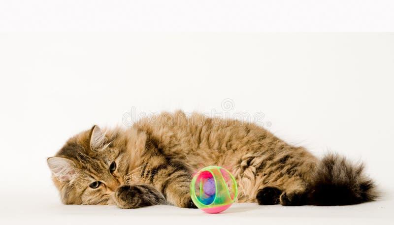 Junge Katze, die die Kugel jagt lizenzfreie stockfotos