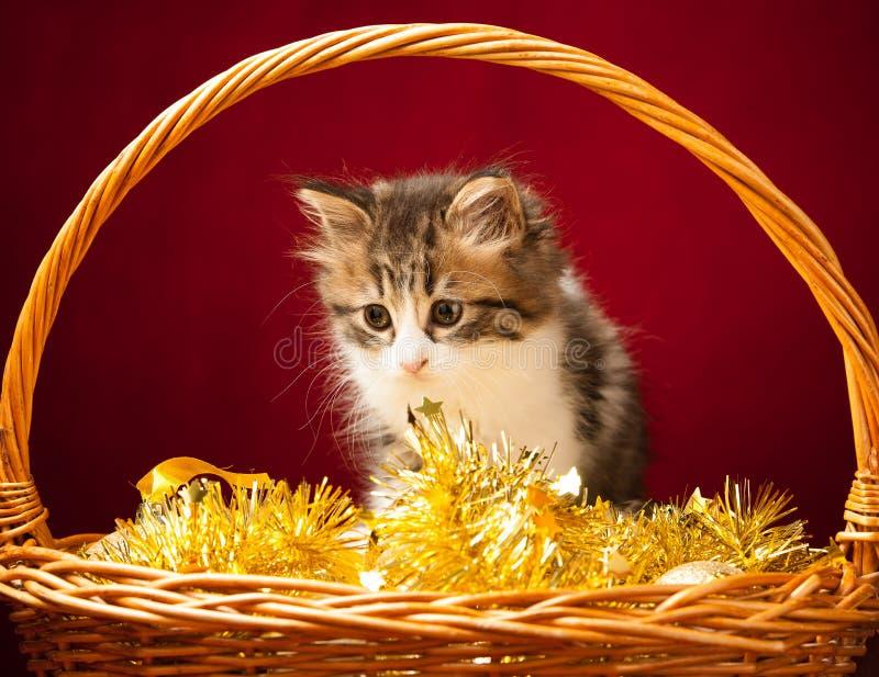 Junge Katze, die mit Weihnachtsverzierungen spielt lizenzfreie stockfotografie