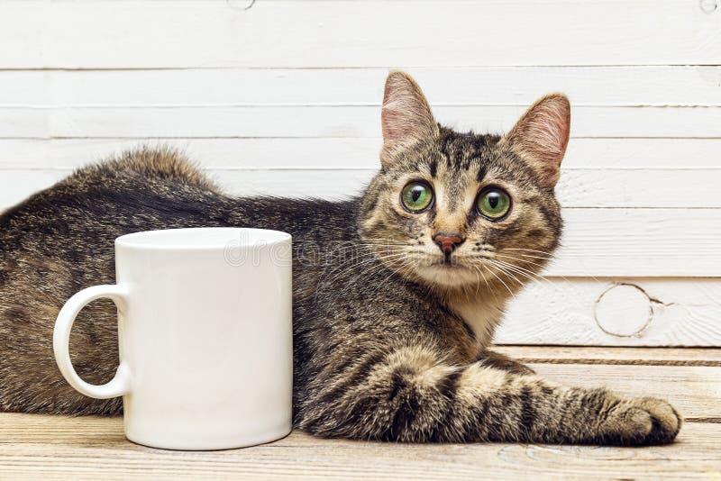 Junge Katze, die nahe bei einer weißen Kaffeetasse liegt stockfotos