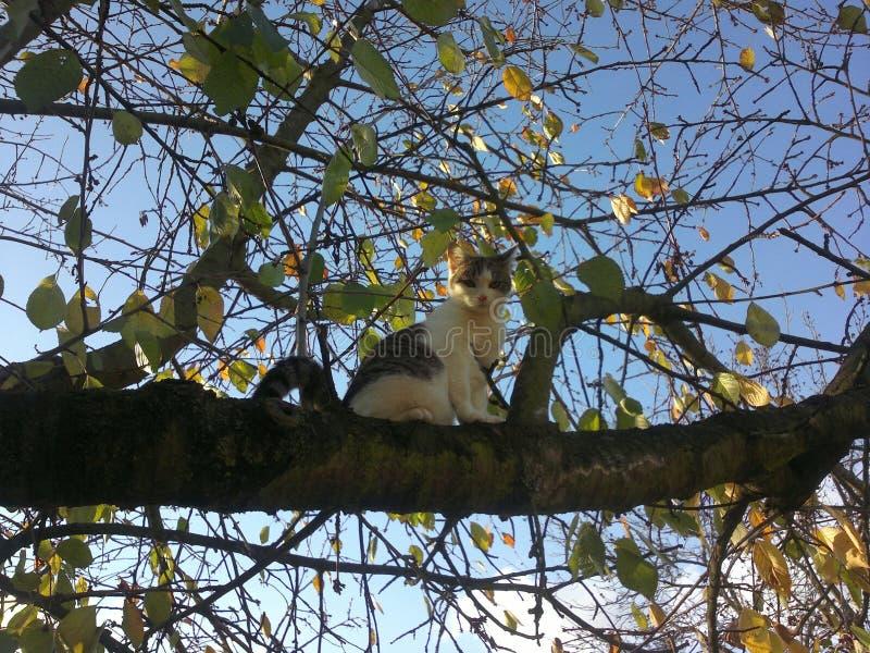 Junge Katze, Kätzchen, sitzend auf Baum und schauen vertraulich stockbild