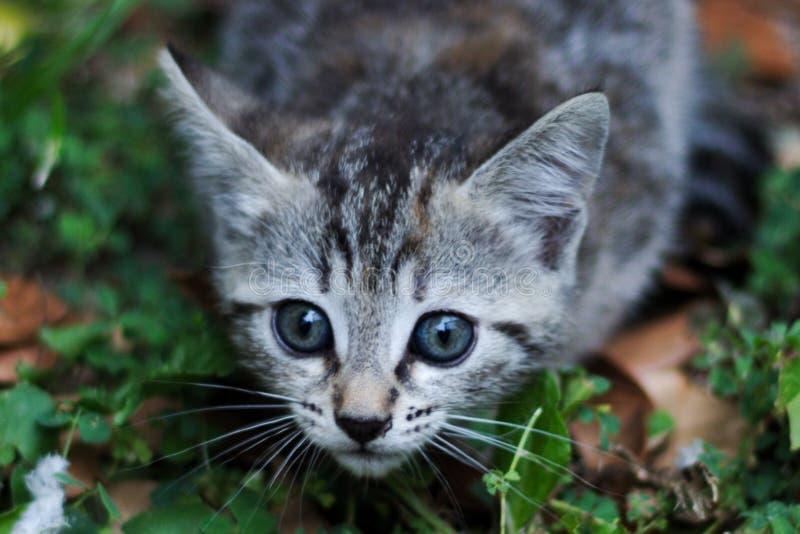 Junge Katze reizend stockfotografie