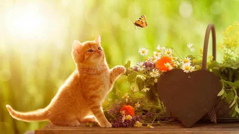 Junge Katze und Schmetterling mit medizinischen Kräutern stockfotografie