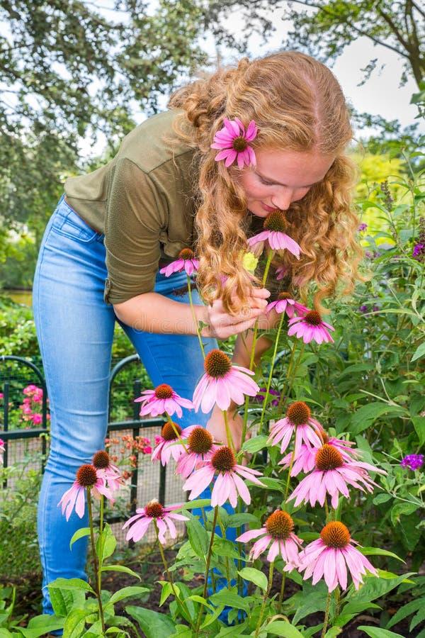 Junge kaukasische Frau riechende Echinaceablume im Garten lizenzfreies stockfoto