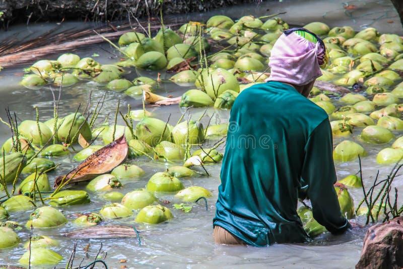 Junge Kokosnusserntearbeitskraft lizenzfreie stockfotos