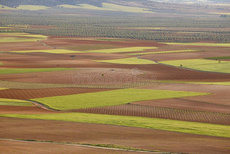 Junge landwirtschaftliche spanische olivgrüne Felder in Toledo, Spanien cultivate lizenzfreie stockbilder
