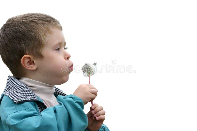 Junge mit einem Löwenzahn stockfotografie