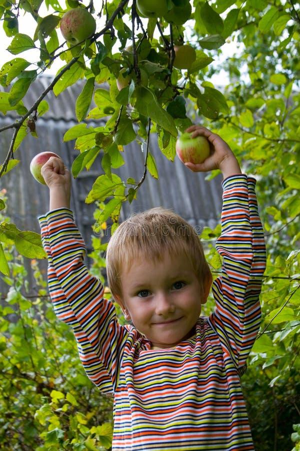 Junge montiert die Ernte der Äpfel lizenzfreie stockfotografie