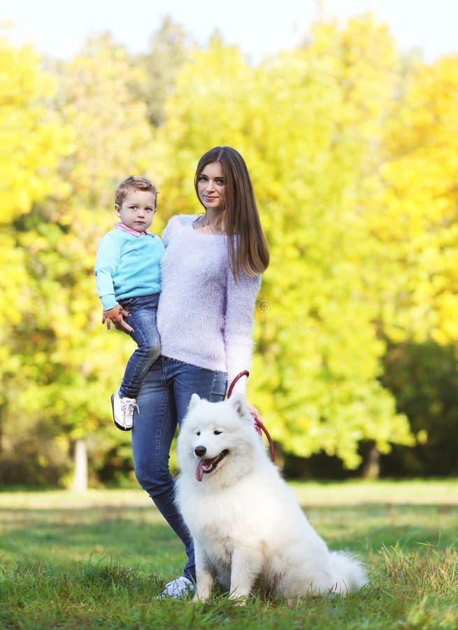 Junge Mutter und Kind, die mit weißem Samoyedhund geht lizenzfreie stockfotografie