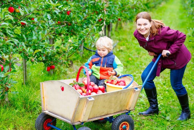Junge Mutter und kleine Kleinkindjungensammelnäpfel stockfoto