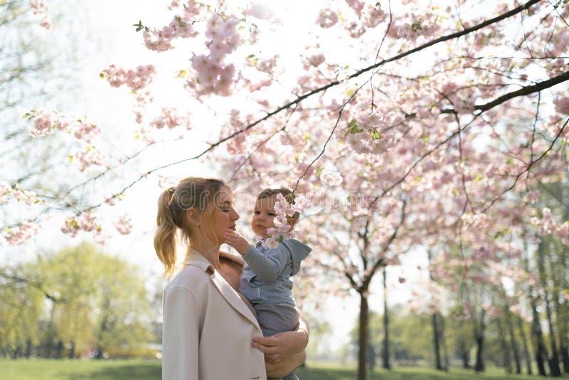 Junge Muttermutter, die ihr kleines Babysohn-Jungenkind unter bl?henden SAKURA Cherry-B?umen mit den fallenden rosa Blumenbl?tter stockfotografie