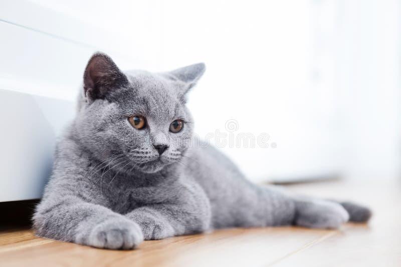 Junge nette Katze, die auf Bretterboden stillsteht stockfoto