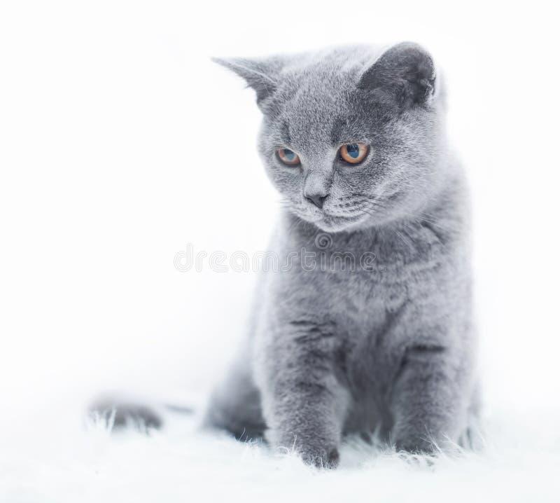 Junge nette Katze, die auf weißem Pelz stillsteht lizenzfreie stockfotografie