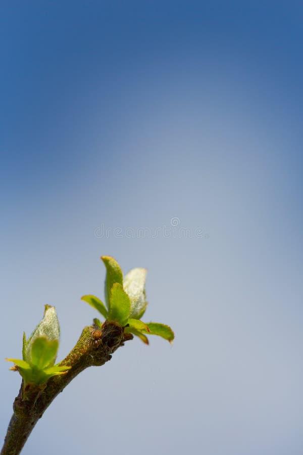 Junge neue Blätter wachten nach cloe Zeit des Winters im Frühjahr herauf sho auf stockfoto