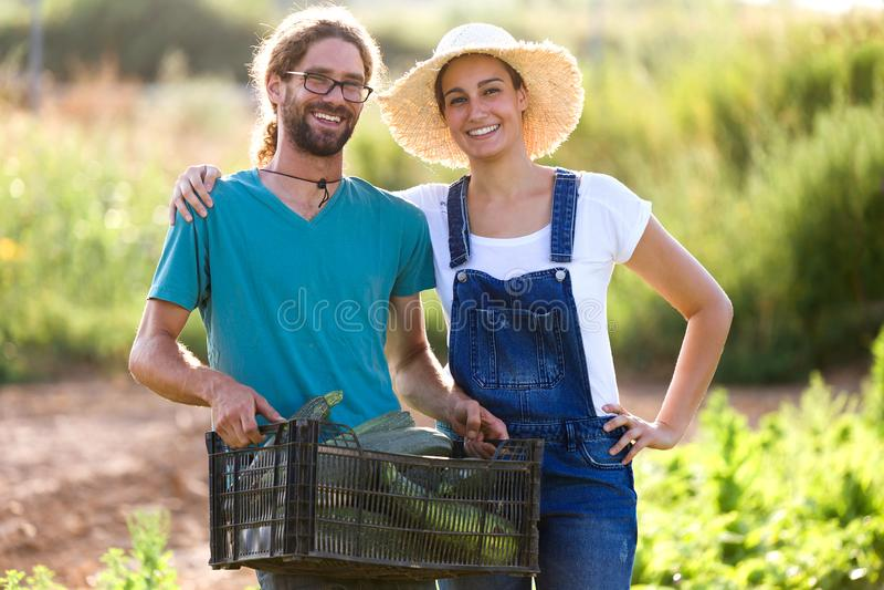 Junge Paare des Gartenkünstlers, die Kamera beim Halten des Frischgemüses in der Kiste im Garten betrachten stockbild
