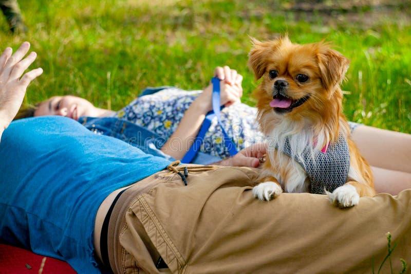 Junge Paare, die mit einem Hund in einem Stadtpark genießen stockbild