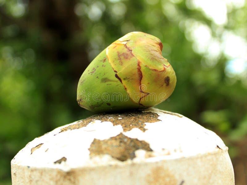 Junge rohe Kokosnuss lizenzfreie stockfotos