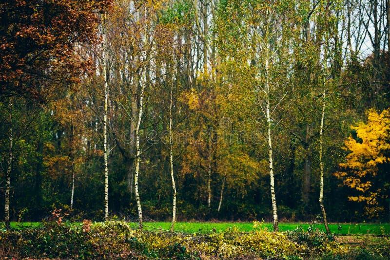 Junge Suppengrün mit Herbstlaub auf dem Gebiet stockfoto