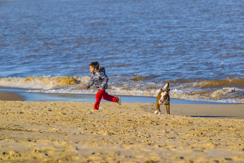 Junge und Hund am Strand stockbilder