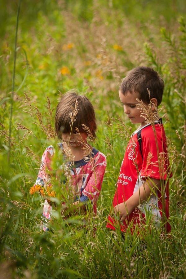 Junge und Mädchen im hohen Gras lizenzfreie stockfotos