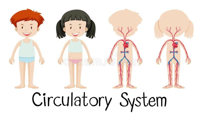 Junge und Mädchen mit Kreislaufsystemdiagramm lizenzfreie abbildung