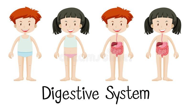Junge und Mädchen mit Verdauungssystem vektor abbildung