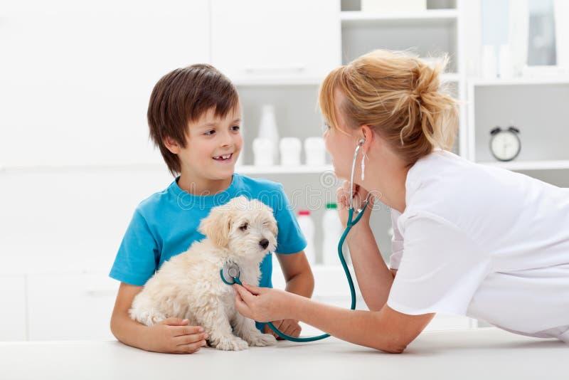 Junge und sein flaumiger Hund an der Veterinärüberprüfung stockbilder