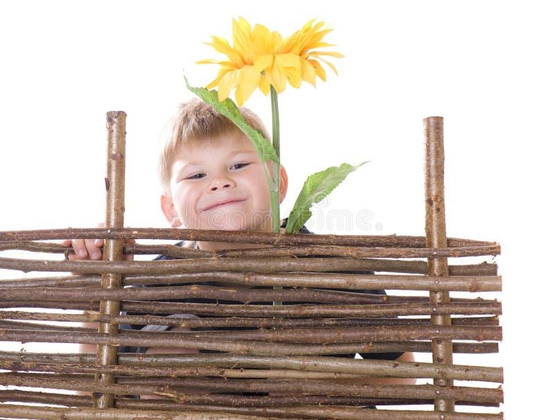 Junge und Sonnenblume lizenzfreies stockfoto