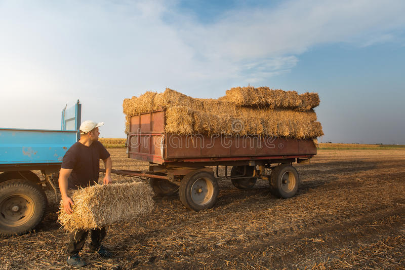 Junge und starke Landwirtwurfs-Heuballen in einem Sattelzug - b lizenzfreies stockbild