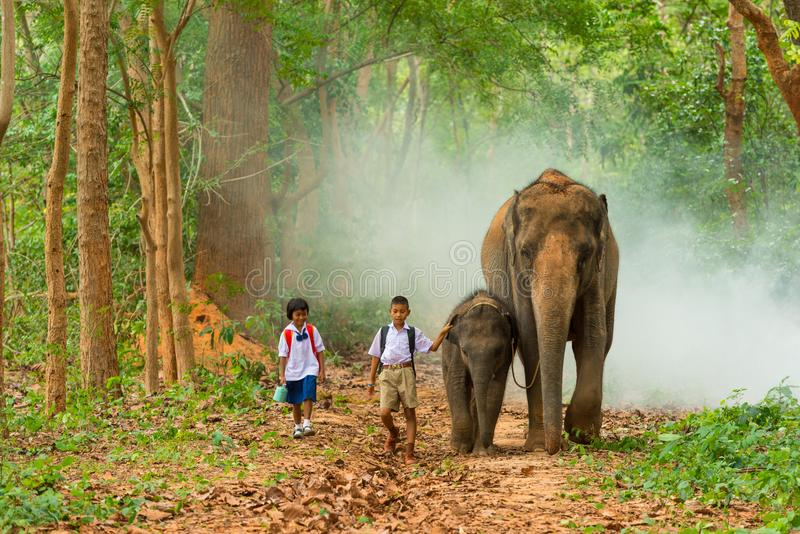 Junge und Studentinnen in der Uniform gehend zusammen mit Elefanten lizenzfreie stockfotografie