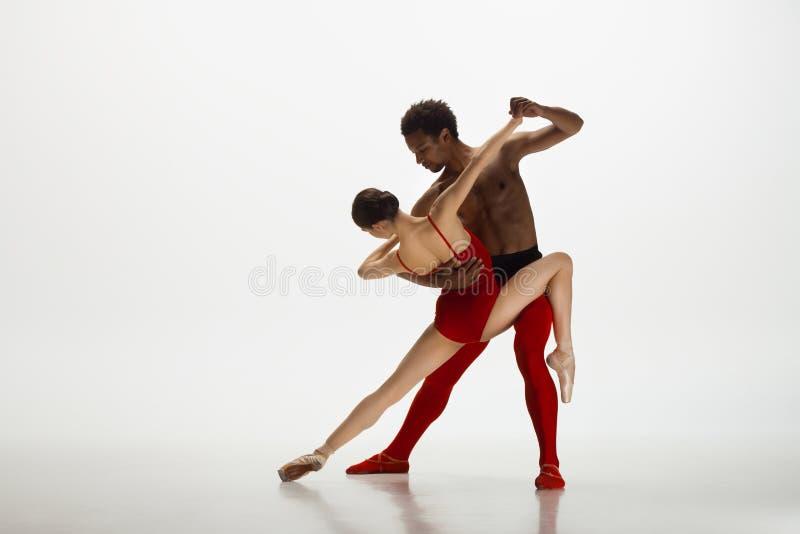 Junge würdevolle Paare von den Balletttänzern, die auf weißen Studiohintergrund tanzen stockbild