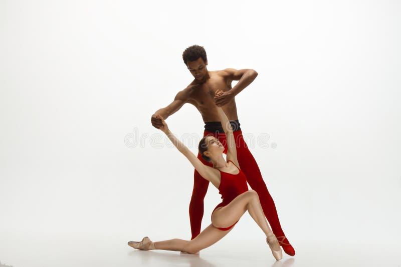 Junge würdevolle Paare von den Balletttänzern, die auf weißen Studiohintergrund tanzen stockbilder