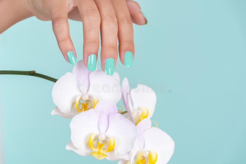 Junge weibliche Hand mit einer Türkisfarbmaniküre auf den Nägeln und heller lila Orchideenblume lokalisiert auf weichem blauem Hi lizenzfreie stockfotos