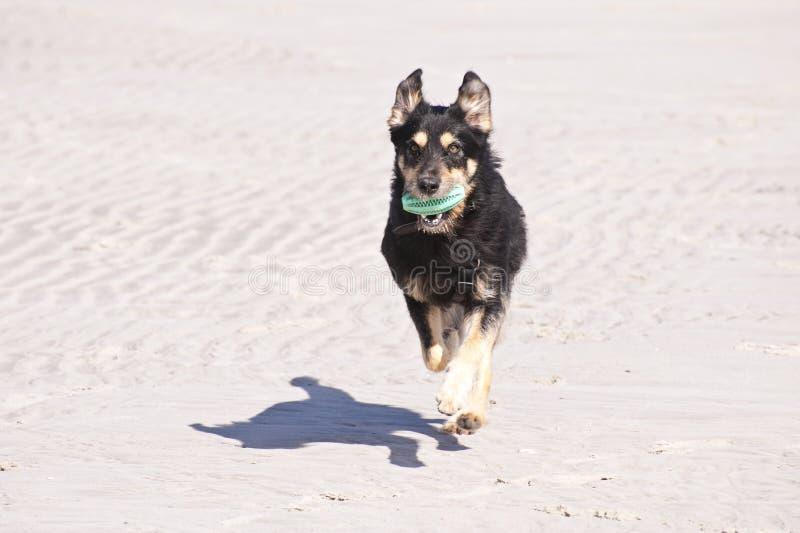 Jungekreuzung Hund lizenzfreies stockbild