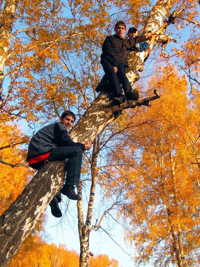 Jungen auf dem Baum stockfotos