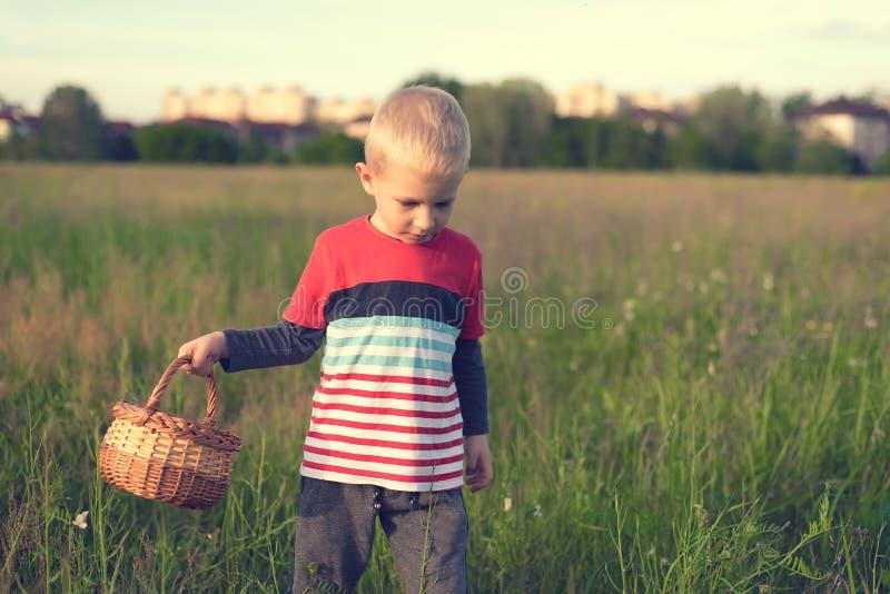 Jungen-Auswahlpilze auf dem Feld stockbild