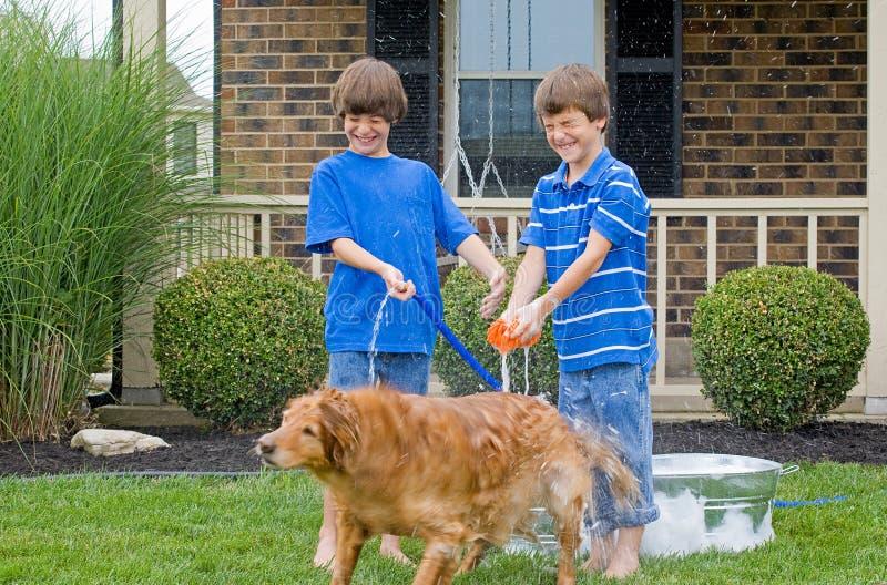 Jungen, die Hund ein Bad geben stockbilder