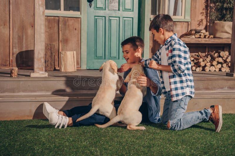 Jungen, die zusammen mit netten Labrador-Welpen spielen stockfoto