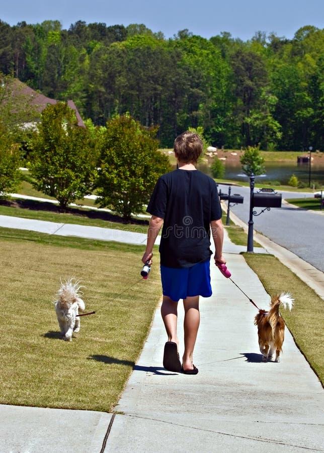 Jungen-gehende Hunde lizenzfreie stockfotografie