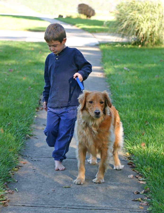 Jungen-gehender Hund stockbilder