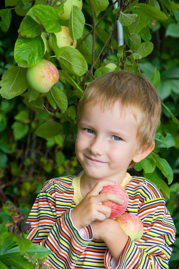 Jungenernten der Äpfel stockfoto