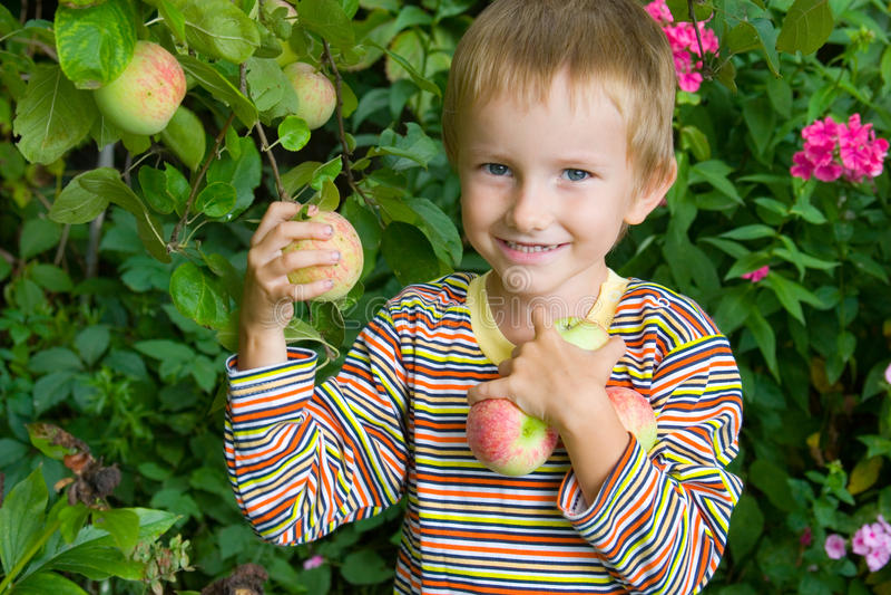 Jungenernten der Äpfel stockbild